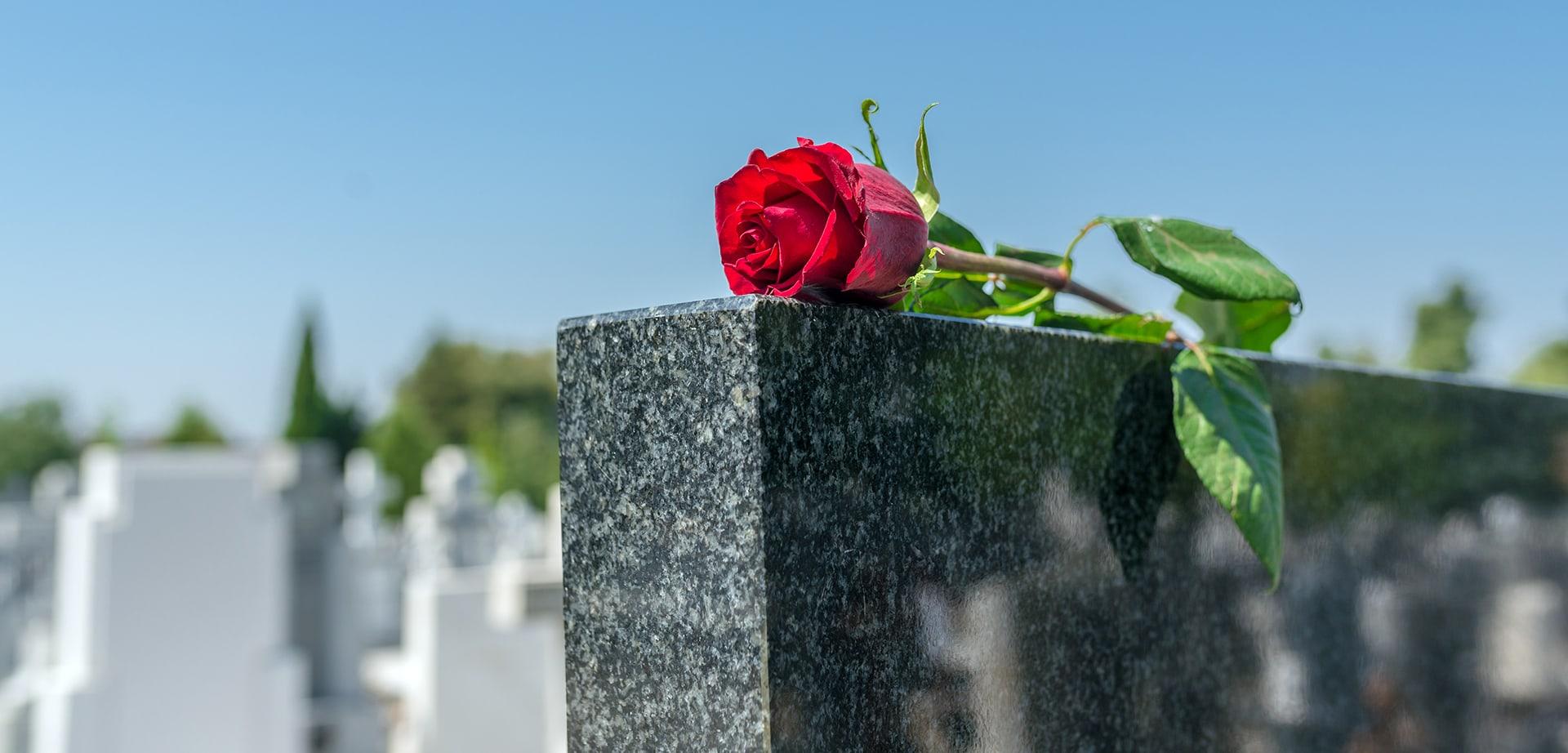 rote rose auf grauem grabstein